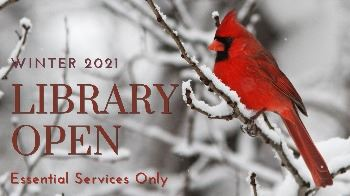 cardinal on a branch in the snow, Library reopening February 1st